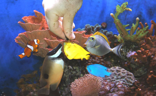Peces para acuarios marinos imagui for Acuarios para peces marinos