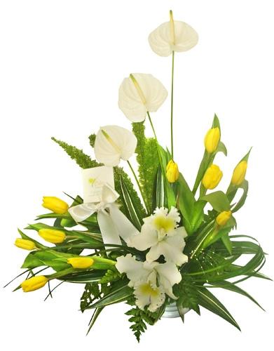 Orquideas, anturios y tulipanes