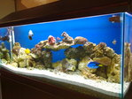 marine aquarium and furniture