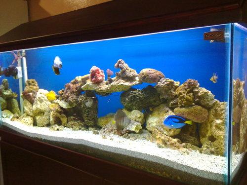 Marine Aquarium en meubilair