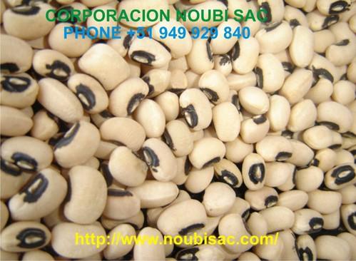 frejol castilla Vigna unguiculata black eyes beans