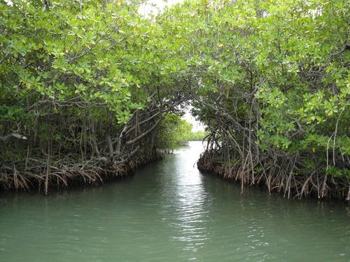 Canales en Parguera Lajas Puerto Rico