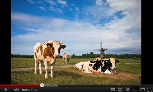 Animales en holandés (aprender holandés)