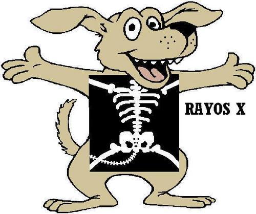 x ray