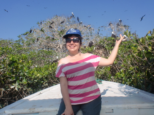 Mangroves en Bird Island