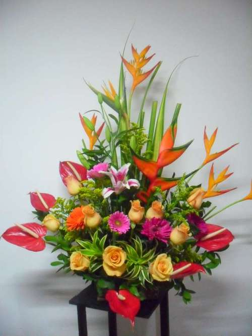 Tropische Blumen