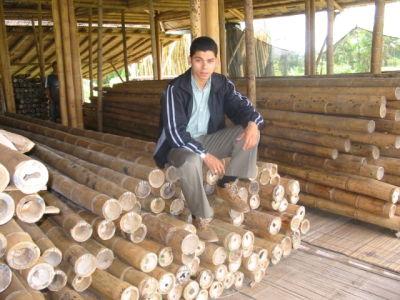 Sale Bamboo / Bambu