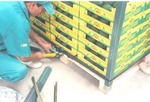 Arming Pallet de FrUtas with Hardangles Products