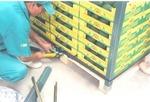 Armando Pallet de FrUtas con Productos Hardangles